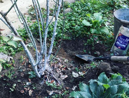 たいせつな真冬の庭仕事。_d0077603_14533772.jpg