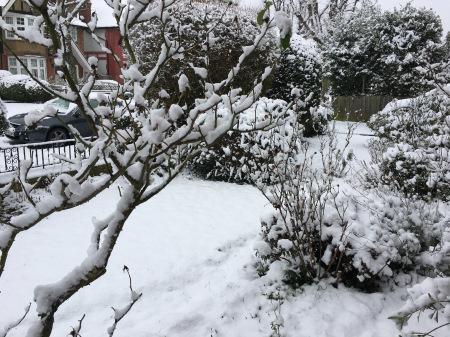 雪の日_f0123922_06464213.jpeg