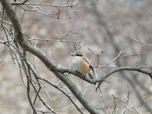 冬の鳥_a0351368_22080602.jpg