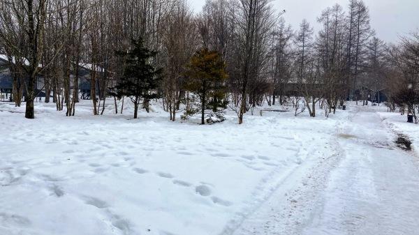 今日も雪景色のきたかるより*_b0174425_16592851.jpg