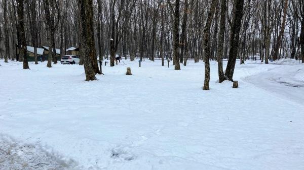 今日も雪景色のきたかるより*_b0174425_17073226.jpg