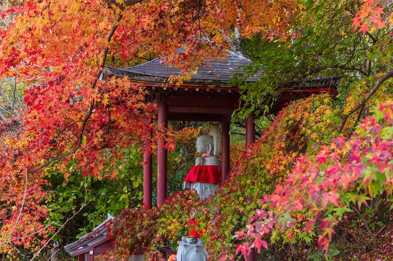 2020紅葉きらめく京都 和束正法寺の散り光景_f0155048_22570655.jpg