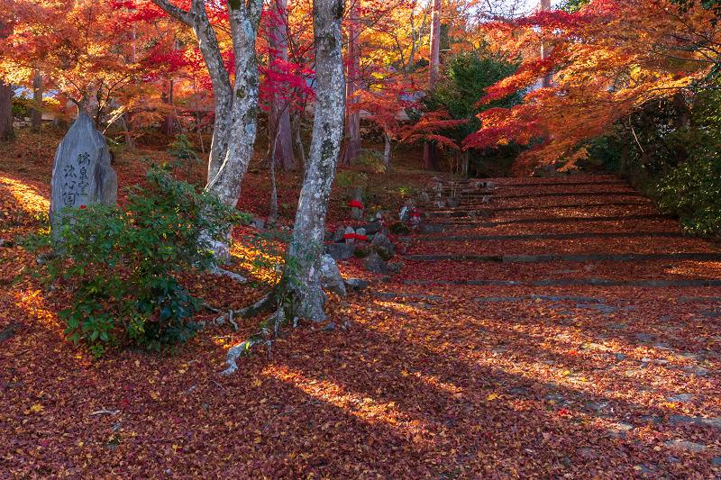 2020紅葉きらめく京都 和束正法寺の散り光景_f0155048_22580847.jpg