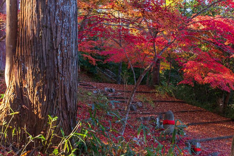 2020紅葉きらめく京都 和束正法寺の散り光景_f0155048_23003812.jpg
