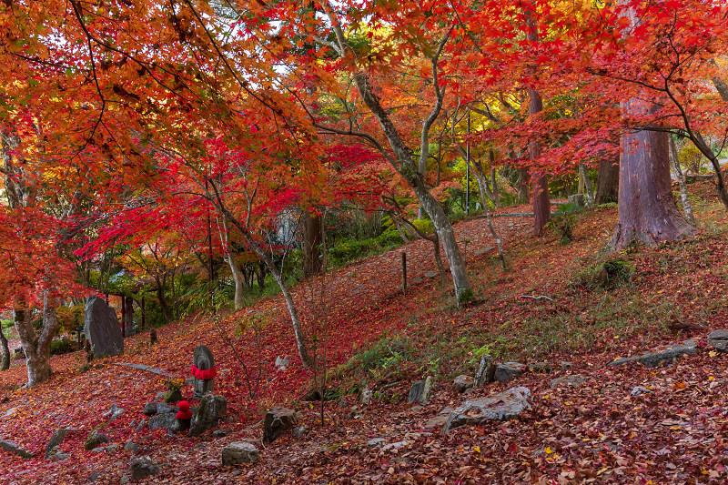 2020紅葉きらめく京都 和束正法寺の散り光景_f0155048_23012093.jpg