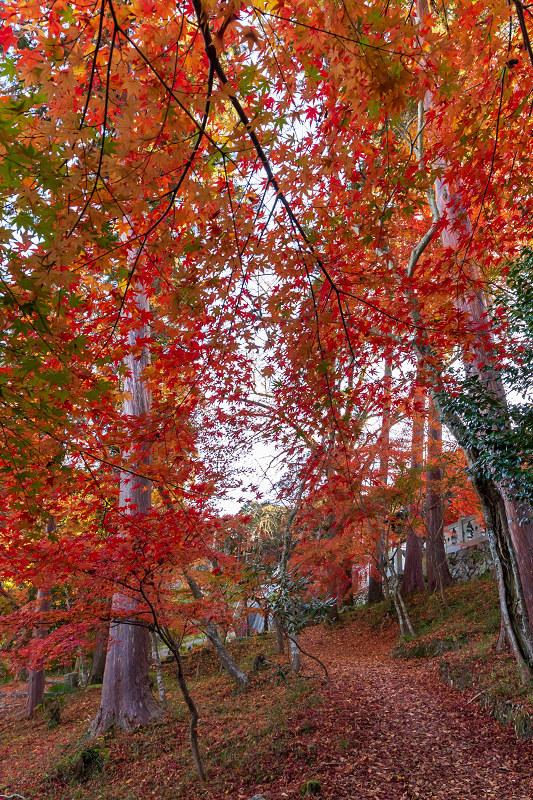 2020紅葉きらめく京都 和束正法寺の散り光景_f0155048_23012782.jpg