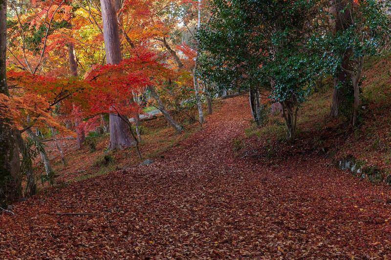 2020紅葉きらめく京都 和束正法寺の散り光景_f0155048_23015048.jpg