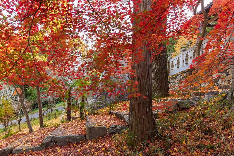 2020紅葉きらめく京都 和束正法寺の散り光景_f0155048_23021198.jpg