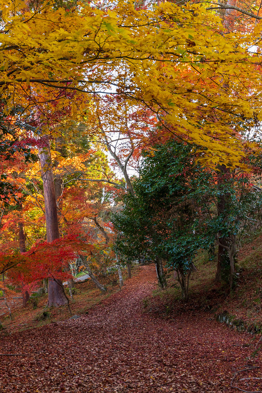 2020紅葉きらめく京都 和束正法寺の散り光景_f0155048_23135946.jpg