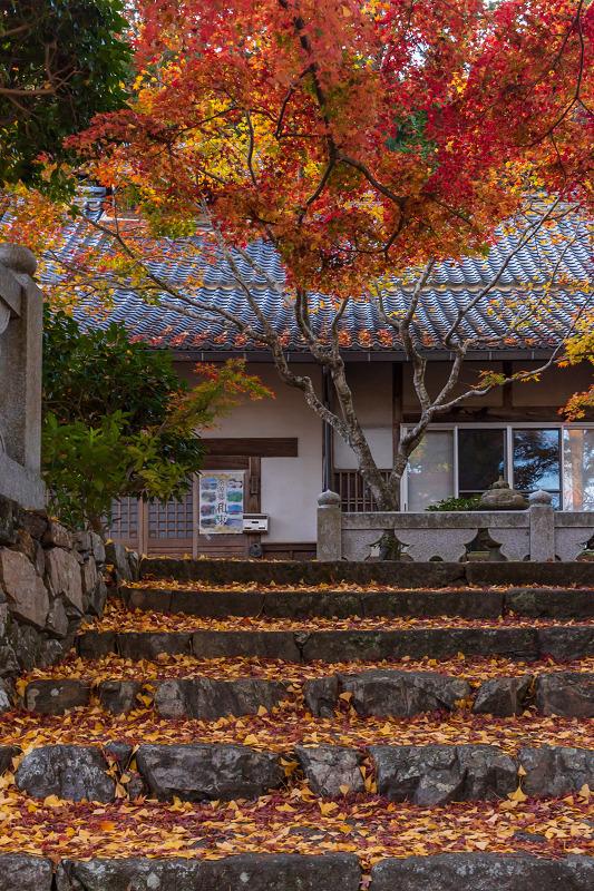 2020紅葉きらめく京都 和束正法寺の散り光景_f0155048_23140672.jpg