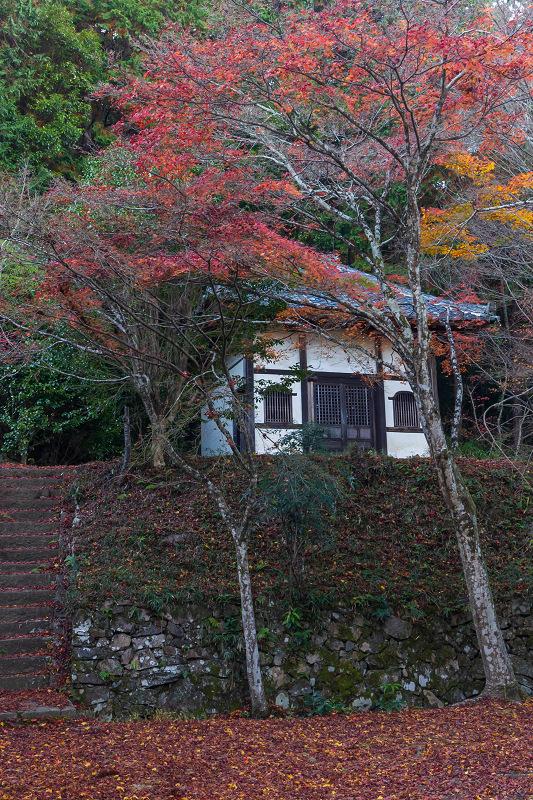 2020紅葉きらめく京都 和束正法寺の散り光景_f0155048_23145029.jpg