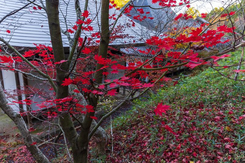 2020紅葉きらめく京都 和束正法寺の散り光景_f0155048_23145326.jpg