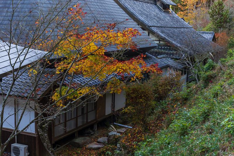 2020紅葉きらめく京都 和束正法寺の散り光景_f0155048_23145766.jpg