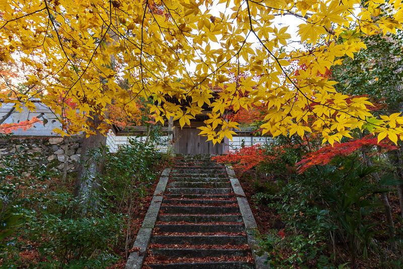 2020紅葉きらめく京都 和束正法寺の散り光景_f0155048_23151578.jpg