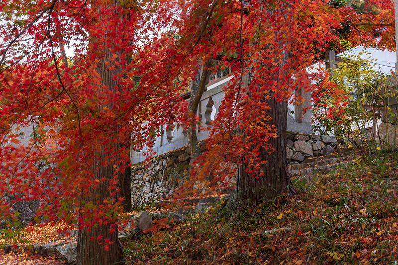 2020紅葉きらめく京都 和束正法寺の散り光景_f0155048_23152471.jpg