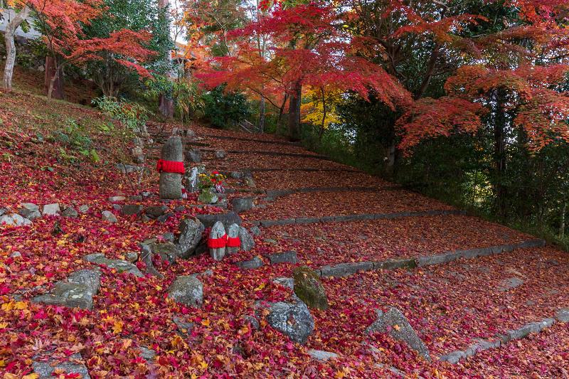 2020紅葉きらめく京都 和束正法寺の散り光景_f0155048_23174351.jpg