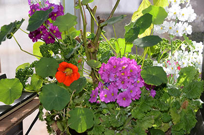 デタラメでも賑やかな冬の寄せ植え_e0005362_04525772.jpg