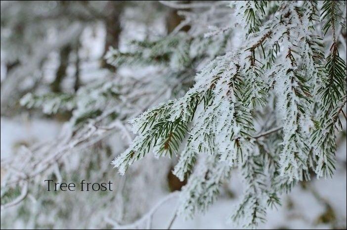霧氷の美しさ_b0341869_10525665.jpg