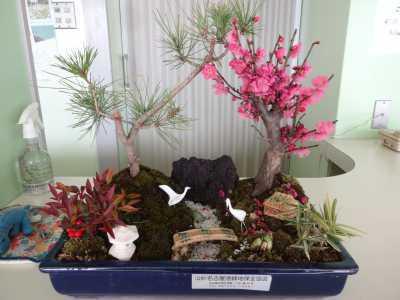 正月用寄せ植え盆栽をリース及び販売しました!_d0338682_11202403.jpg