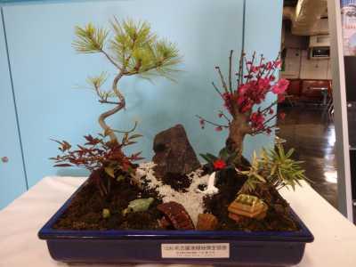 正月用寄せ植え盆栽をリース及び販売しました!_d0338682_11243731.jpg