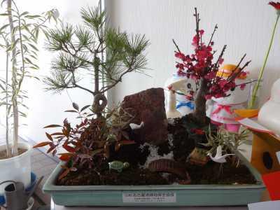 正月用寄せ植え盆栽をリース及び販売しました!_d0338682_11253741.jpg