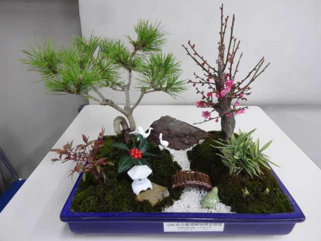 正月用寄せ植え盆栽をリース及び販売しました!_d0338682_11321746.jpg