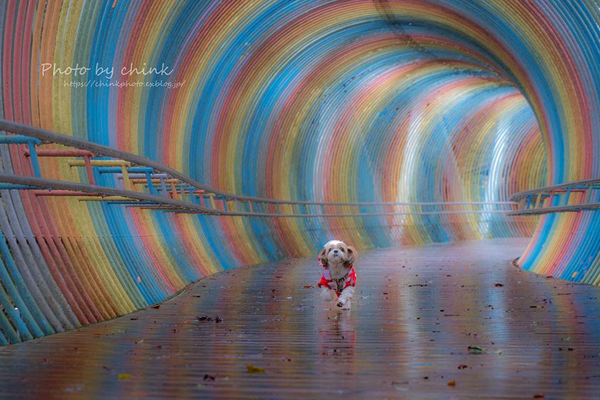 虹のトンネル_e0254298_18520060.jpg