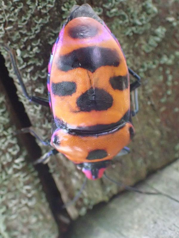 植物園の木にカメムシ?の仲間を見つけました_b0025008_09564136.jpg