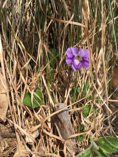 春が待ち遠しい_a0199409_22181208.jpg