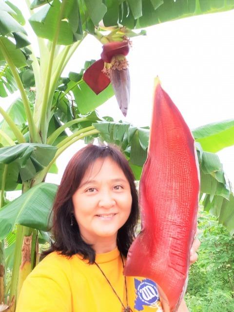 バナナの花_c0211615_13474548.jpg