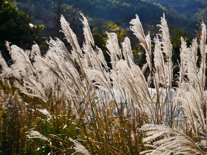里山の風景 枯れすすき  2021-02-01 00:00_b0093754_20062152.jpg