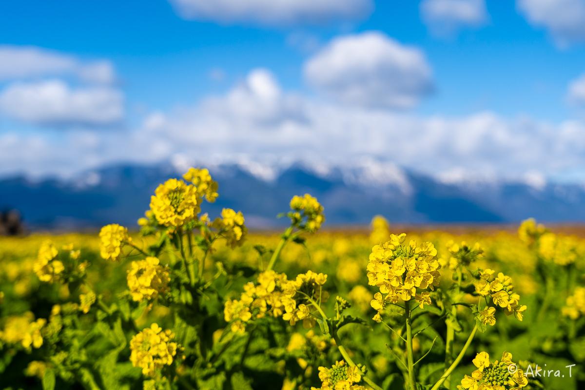 いつもの菜の花..._f0152550_22541589.jpg