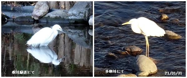 程久保川を散歩、1月の満月、雪降る_c0051105_20235023.jpg