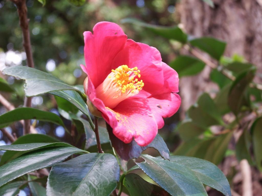 冬の花_b0049307_10180763.jpg