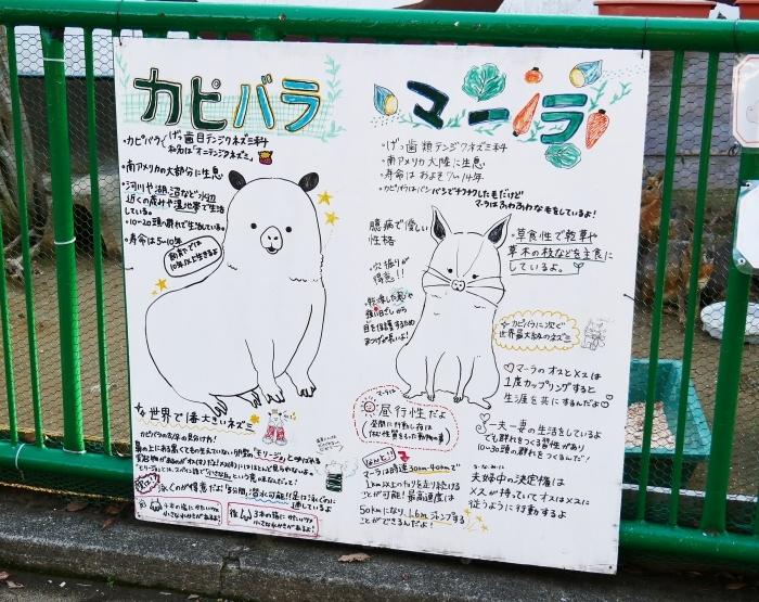お城の動物園 カピバラ  2021-02-03 00:00_b0093754_23214337.jpg