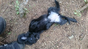 犬は大らかに育てよう!2の⑫_b0084194_18225202.jpg