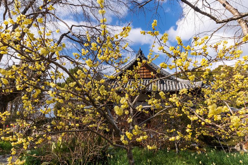 冬の花咲く恵心院_f0155048_23504376.jpg