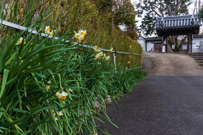 冬の花咲く恵心院_f0155048_23505883.jpg