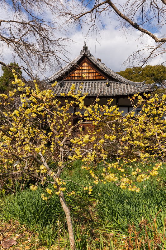 冬の花咲く恵心院_f0155048_23520361.jpg