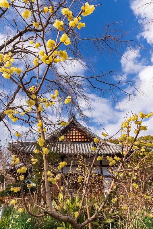冬の花咲く恵心院_f0155048_23521756.jpg