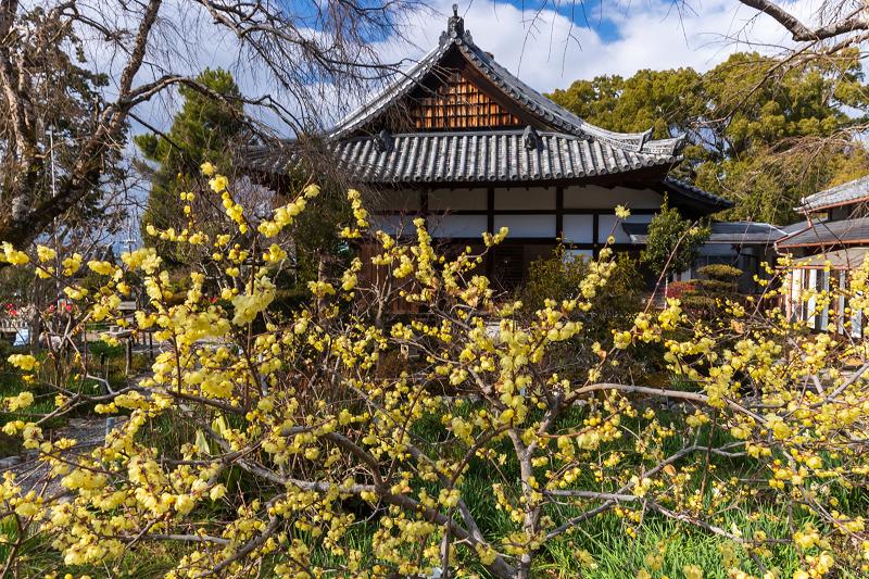 冬の花咲く恵心院_f0155048_23541961.jpg