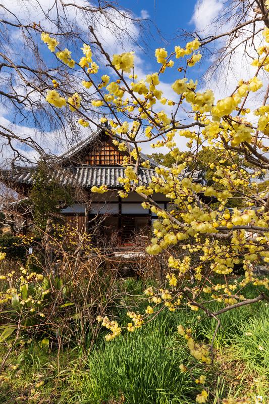 冬の花咲く恵心院_f0155048_23542511.jpg