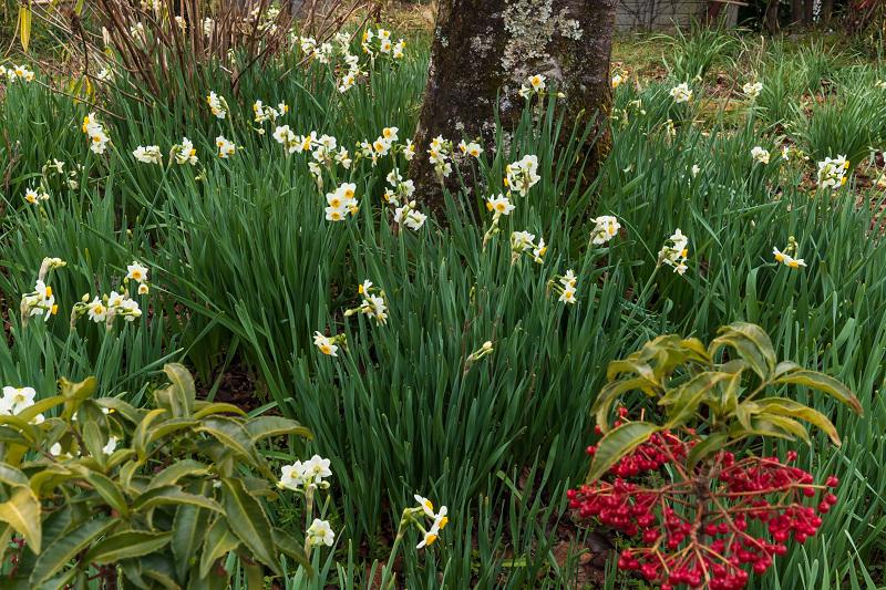 冬の花咲く恵心院_f0155048_23551398.jpg