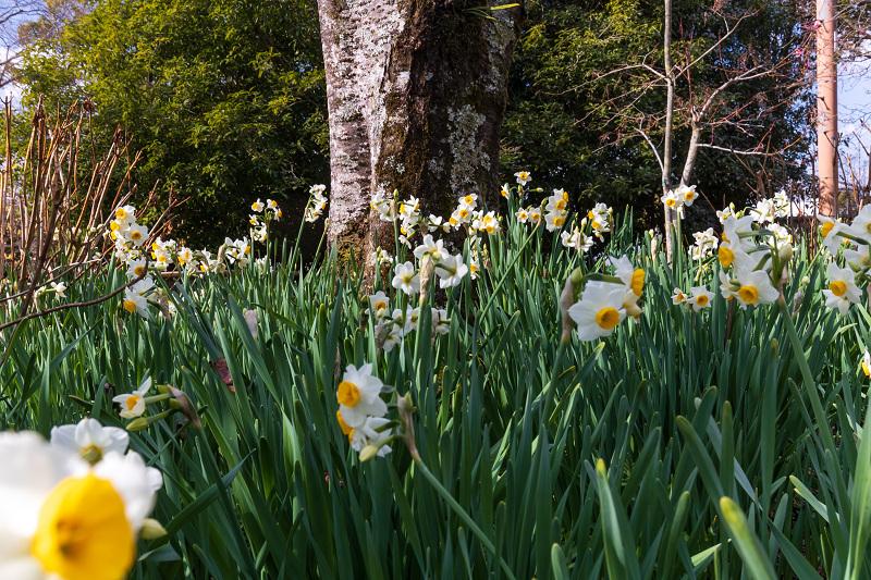 冬の花咲く恵心院_f0155048_23551630.jpg
