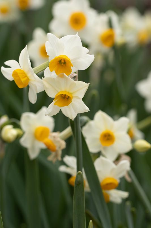 冬の花咲く恵心院_f0155048_23554811.jpg