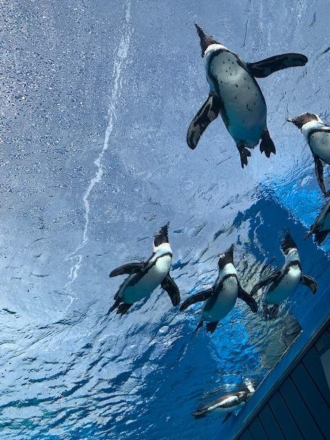 ペンギンを下から覗いたら_d0339681_16533401.jpg