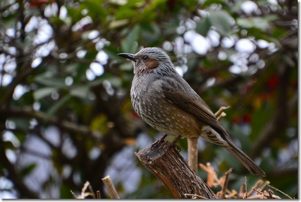 庭に来る鳥_d0089358_21132447.jpg