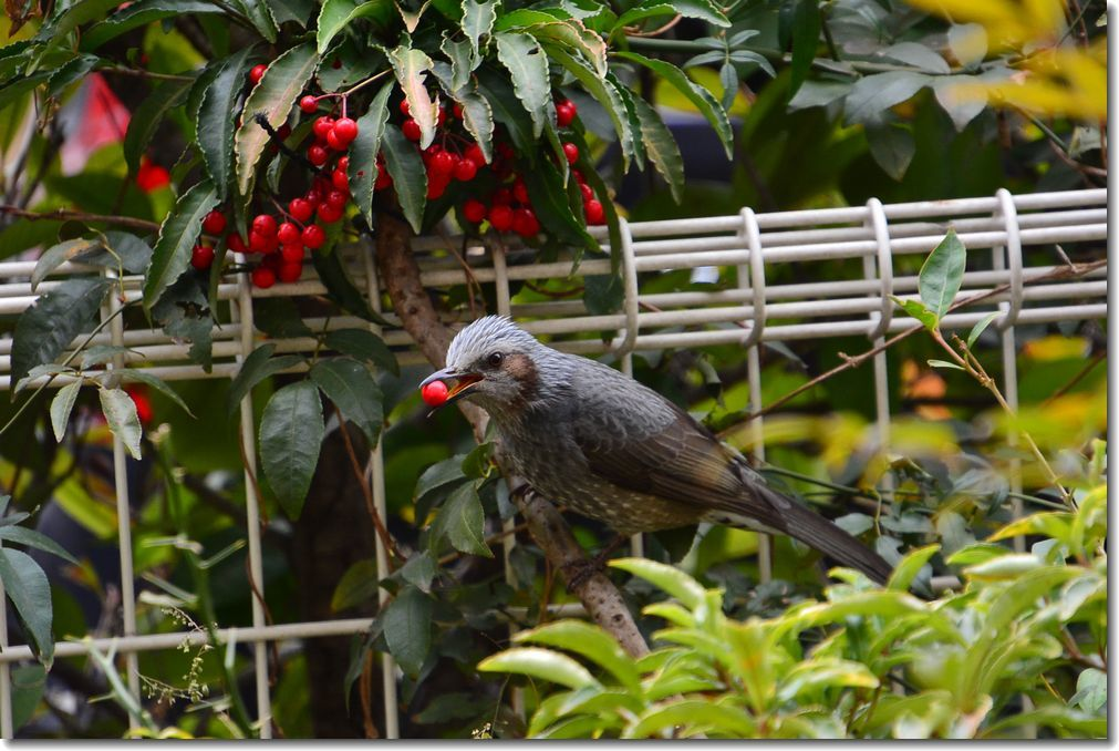 庭に来る鳥_d0089358_21133530.jpg
