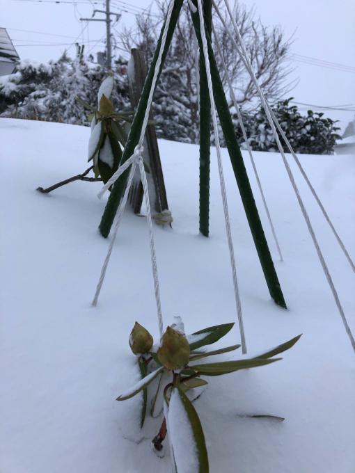 冬真っ盛り_b0093660_08581779.jpg