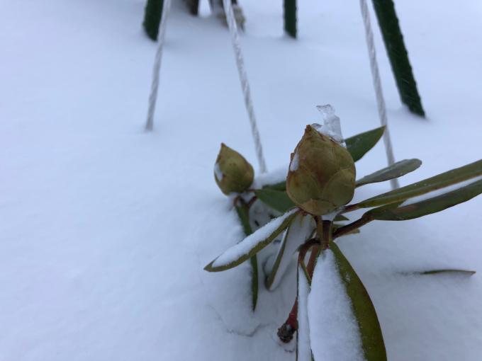 冬真っ盛り_b0093660_08581975.jpg